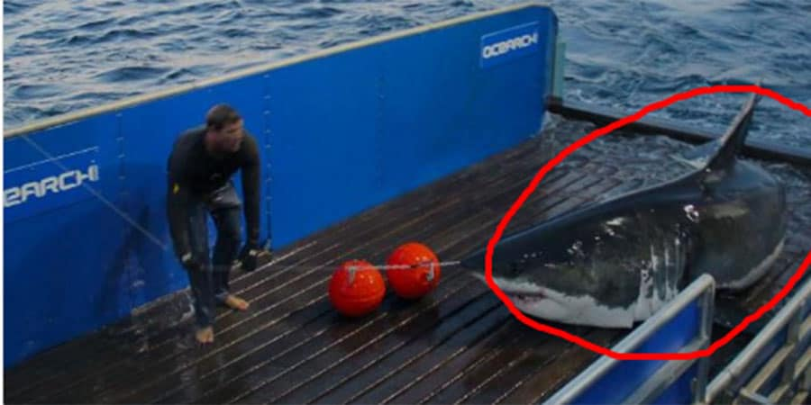 Twitter's Most Famous Shark Has Gone Missing